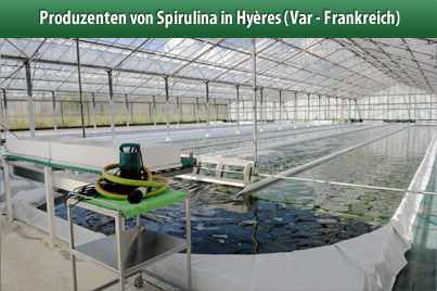 Clos Sainte Aurore Produzenten von Spirulina in Hy�res (Var - France)