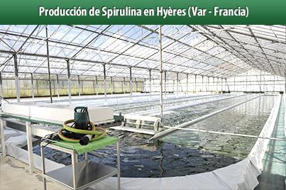 Clos Sainte Aurore�Productor de Espirulina en Hy�res (Francia)