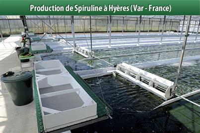 Spiruline Clos Sainte Aurore producteur � Hy�res (Var - France)